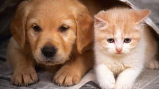 Ai animale de companie? Poți fi obligat să le treci la întreținere