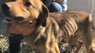 Abominabil! Câini chinuiţi în curtea unei mănăstiri din Constanța