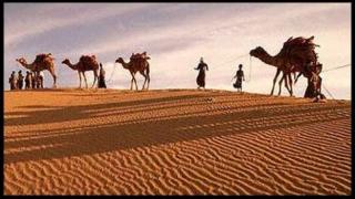 Cămile moarte de foame și de sete în deșert. Cauza: conflictul dintre Arabia Saudită și Qatar