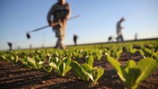Regim special de TVA pentru fermieri, de la 1 ianuarie