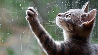 Când se opresc ploile la Constanța?