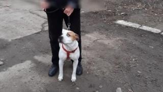 Poliția locală dă amenzi pentru plimbarea câinilor fără lesă sau botniță pe drumurile publice