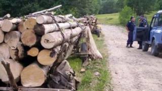 35 de salcâmi, furați de doi bărbați de la  Ocolul Silvic Băneasa