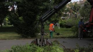 Atenție! Se taie copaci în mai multe zone din Constanța