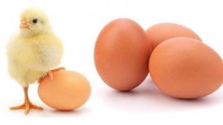 Au intrat pe piața din România ouă contaminate? Veterinarii răspund!