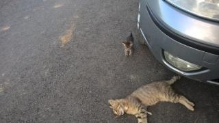 Au murit în chinuri groaznice! Câini și pisici otrăviți la Valu lui Traian!