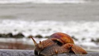 Aveți habar ce este de vină pentru efectul de încălzire globală? Bășinile crustaceelor!