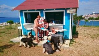 Bar pentru câini în Croaţia: se vând sortimente speciale de bere și înghețată