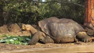 Broaștele țestoase făceau parte din regimul alimentar al oamenilor preistorici