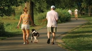 Amenzi pentru câini de talie mare plimbați fără botniță în Tăbăcărie