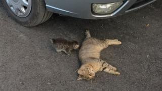 Câini și pisici otrăviți în Valu lui Traian! Primarul reacționează în urma anchetei!