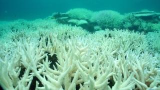 """Catastrofă la Marea Barieră: Coralii """"condamnați""""!"""