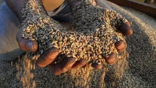 Cât a crescut traficul de cereale din porturi față de acum 9 ani