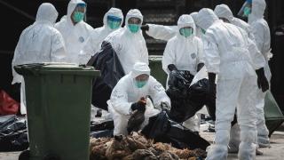 Câte cazuri de gripă aviară au fost identificate în județul Constanța