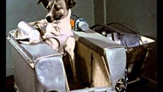 Cățelușa Laika, comemorată la 60 de ani după ce a murit în spațiu