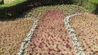 Constanța devine o grădină botanică?