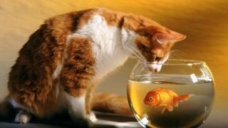 Românul mănâncă pește doar de nevoie... religioasă