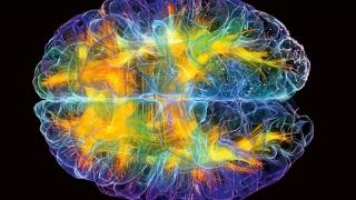 Creierul gândeşte în... anotimpuri