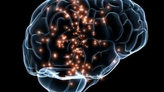 Creierul uman, eterna provocare