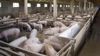 Crescătorii de porci vor primi 2,3 milioane de euro