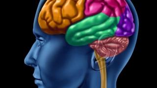 Cu ce alimente ne menținem creierul într-o formă bună?