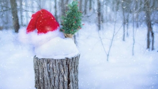 Cum va fi vremea de Crăciun şi Revelion