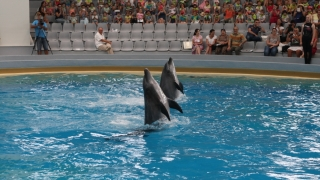 Delfinii își vor lua liber de Paște