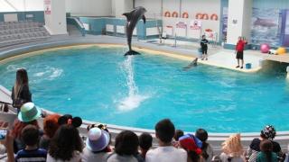 Delfinii și focile își iau liber de Crăciun și Anul Nou