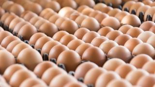 Dezastru pentru Olanda în scandalul ouălor contaminate!