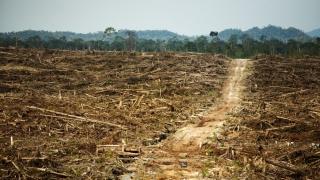 """Distrugerea pădurilor = """"rezervoare de boli"""" care ucid mii de oameni"""