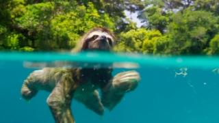 Documentarele despre natură ne fac mai fericiți