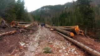 Dosarul retrocedărilor ilegale de păduri, fără măsuri preventive
