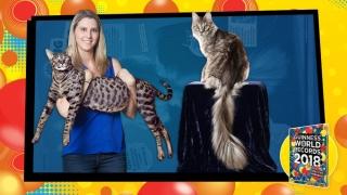 Două pisici extraordinare, date dispărute în urma unui incendiu