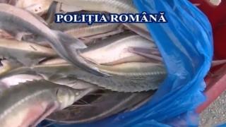 Delta Dunării, raiul braconierilor. Cegă și icre negre confiscate