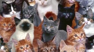 Cele mai frumoase pisici din lume, la Maritimo, în acest weekend!