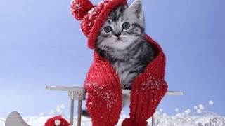 Cum va fi vremea în această iarnă? Vedeţi ce spun specialiştii!