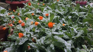 Prognoza meteo pentru weekend: minimele și unde va ninge