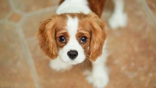 Ce protecție poate oferi prezența câinilor în viața noastră