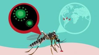 Cercetătorii chinezi cred că Zika ar putea fi... inhibat