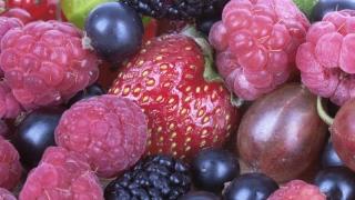 Fructe prețioase! Kilogramul de zmeură se vinde la preț de aur!