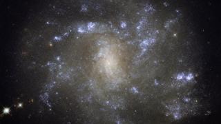 Galaxia NGC 2500, creşă stelară