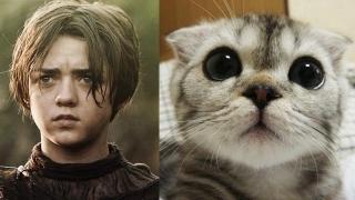 """""""Game of Thrones"""" cu pisici, 40.000 de vizualizări în câteva ore?"""