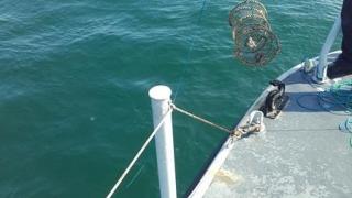 Garda de Coastă a confiscat 38 de unelte de pescuit industrial