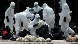 Gripă aviară la Constanța! Ce măsuri au luat autoritățile