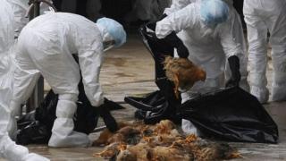 Gripă aviară detectată la oameni!