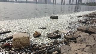 Aproximativ 250 de tone de pești morți, descoperite într-un râu din centrul țării