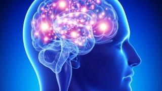 """Hipocampul, """"router"""" pentru asocierile din memorie şi limbaj"""