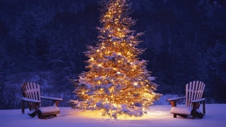 Incredibil! Ce se ascunde în bradul de Crăciun te poate îmbolnăvi!