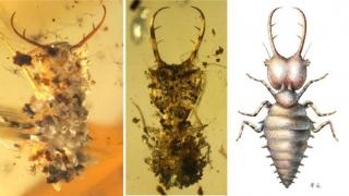 Insectele folosesc camuflajul încă de acum 100 de milioane de ani