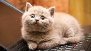 În sfârşit! Interzis la mâncat pisici şi câini în Taiwan!